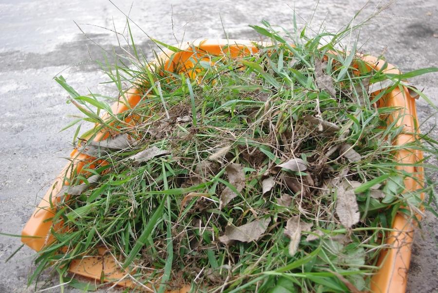 土のままになっている庭の草