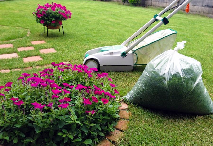 芝刈り機で天然芝の手入れ